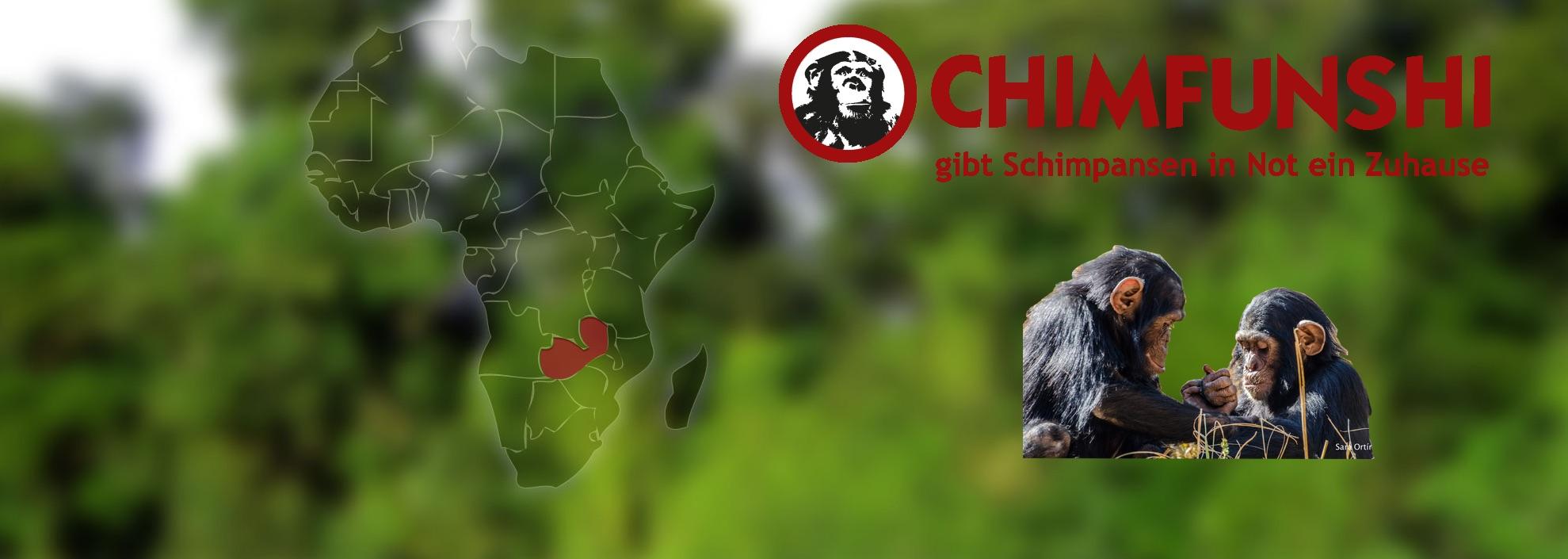 Chimpansen in Not